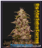Kalashnikov Big Altai Sativa Express Female 3 Seeds